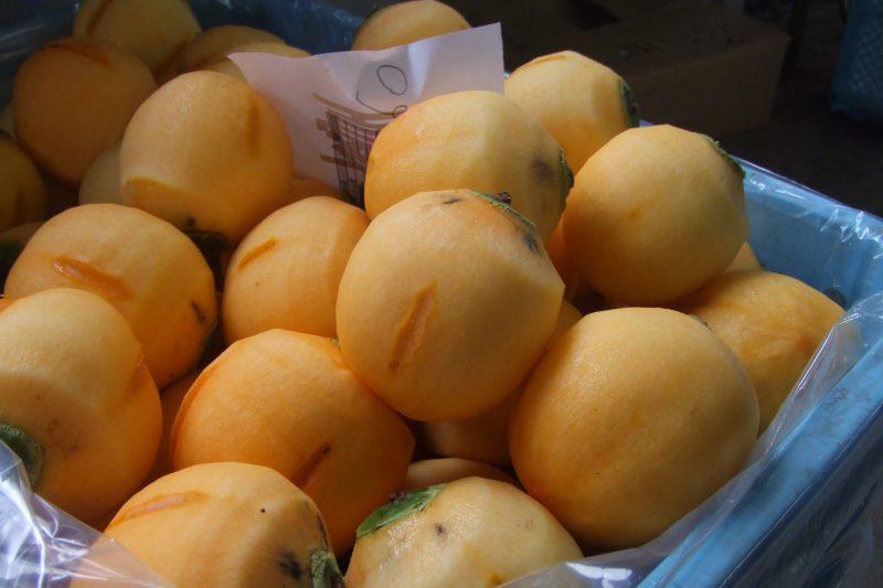 乾燥前 あんぽ柿 西条柿