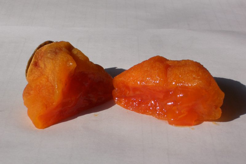 乾燥後 あんぽ柿 西条柿