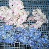 乾燥前 紫陽花の花
