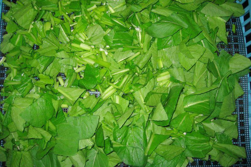 乾燥前 小松菜