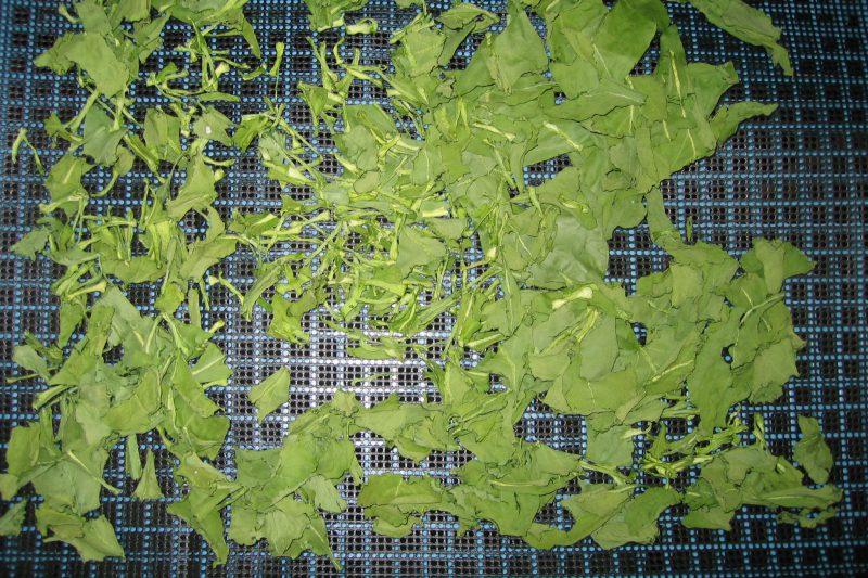乾燥中 小松菜