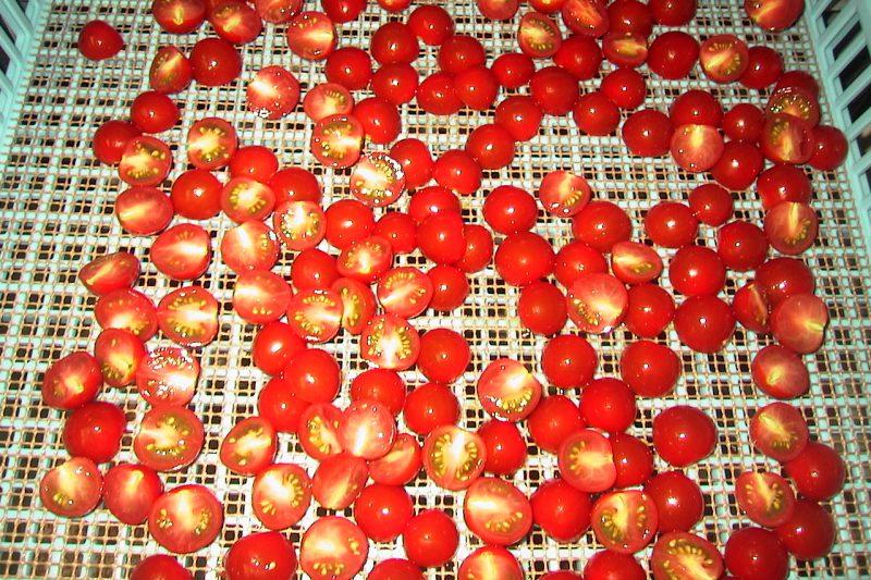 乾燥中 ミニトマト