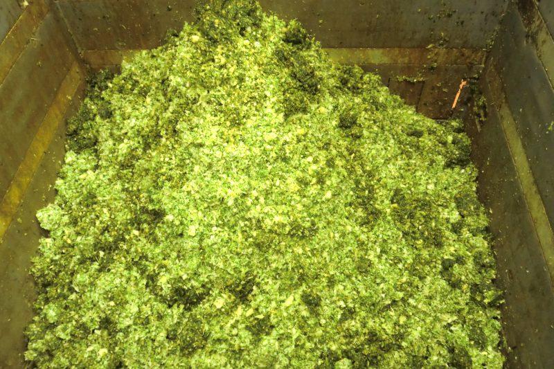 乾燥前 野菜残渣